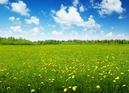 Photo pour field of spring flowers and sunny day - image libre de droit