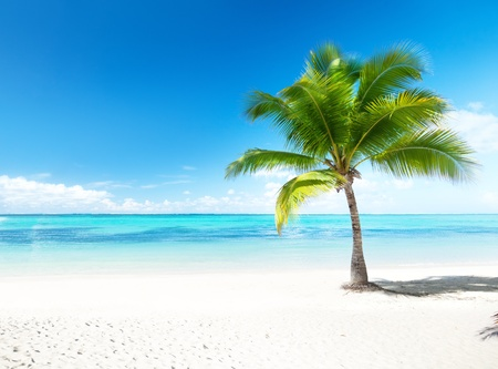 Photo for palm and beach - Royalty Free Image