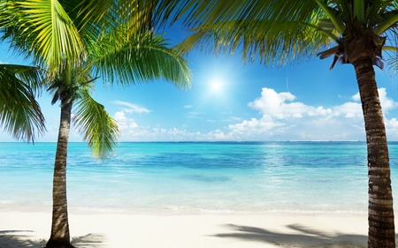 Foto per palms and beach - Immagine Royalty Free