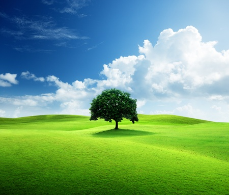 Photo pour one tree and perfect grass field - image libre de droit