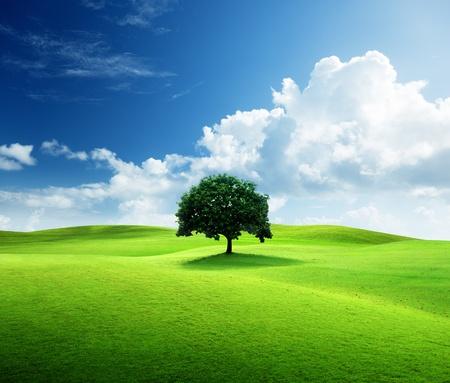 Foto de one tree and perfect grass field - Imagen libre de derechos