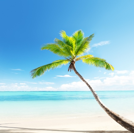 Photo for palm on Caribbean beach - Royalty Free Image