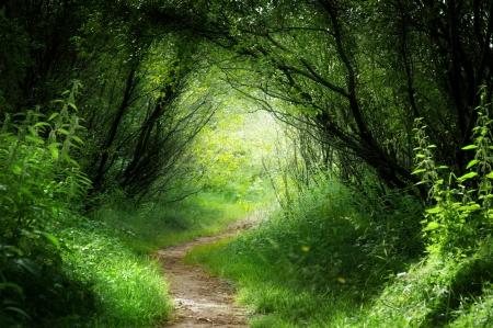 Photo pour way in deep forest - image libre de droit