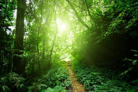Photo pour way in jungle of Malaysia - image libre de droit