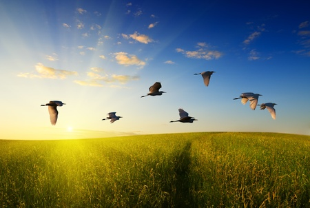 Photo pour field of grass and flying birds - image libre de droit