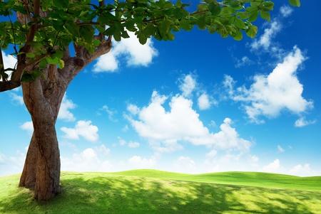 Photo pour green field and tree - image libre de droit