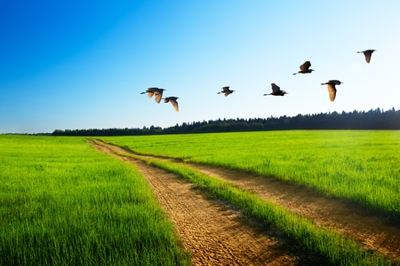 Photo for birds and road - Royalty Free Image