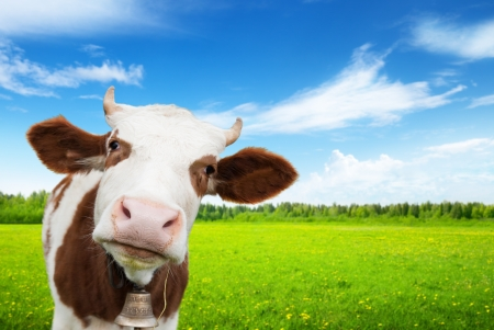 Foto de cow and field of fresh grass - Imagen libre de derechos