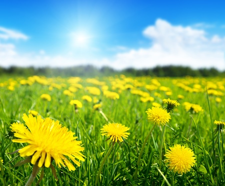 Foto de Field of spring flowers and perfect sunny day - Imagen libre de derechos