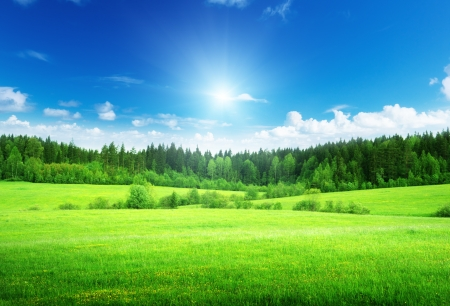 Foto de field and forest in spring time - Imagen libre de derechos