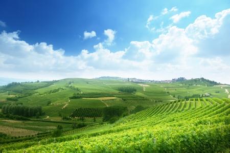 Photo pour vineyards in Piedmont, Italy - image libre de droit