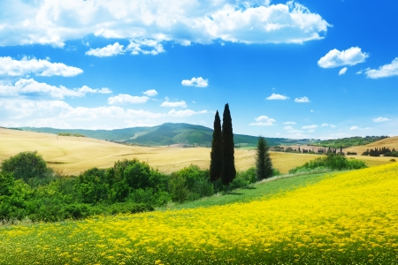 Photo pour field of yellow flowers Tuscany, Italy  - image libre de droit