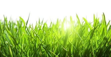 Photo pour green grass isolated on white - image libre de droit