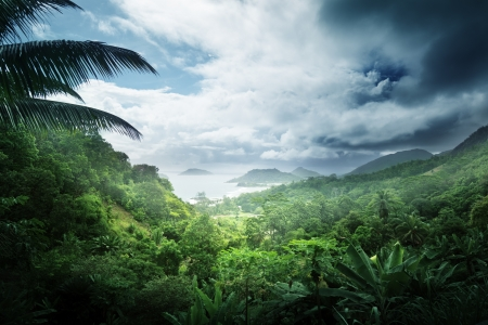 Photo pour jungle of seychelles island - image libre de droit