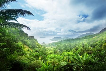 Photo pour jungle of seychelles island - image libre de droit