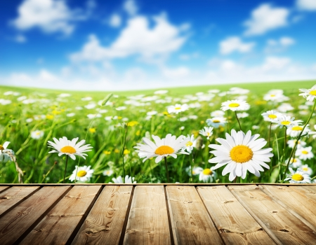 Photo for field of daisy flowers and wood floor - Royalty Free Image