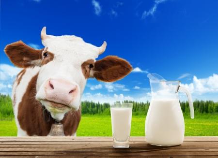 Photo pour cow and milk - image libre de droit