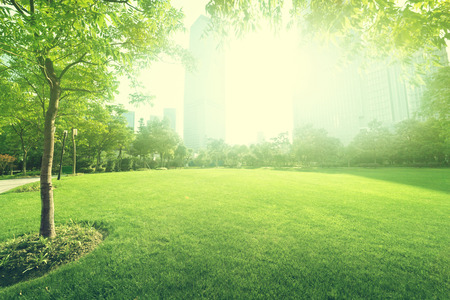 Photo for sunny day in park - Royalty Free Image
