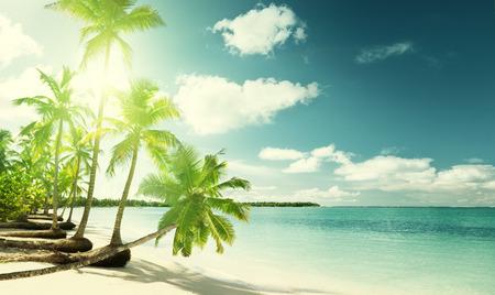 Foto de palms and Caribbean beach - Imagen libre de derechos