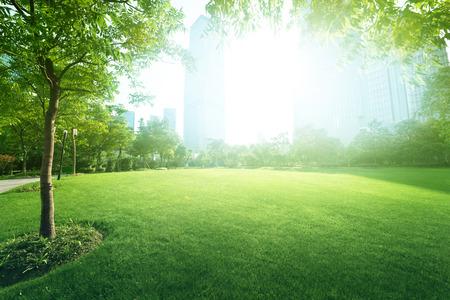Foto de sunny day in park - Imagen libre de derechos