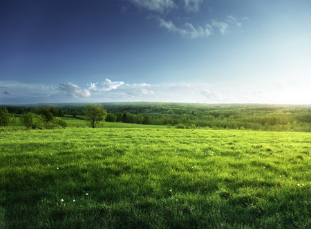 Foto de field of spring grass and forest  in sunset time - Imagen libre de derechos