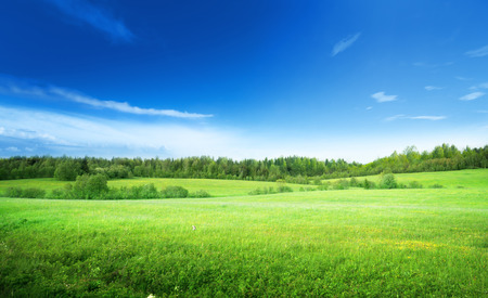 Foto de field of grass and perfect sky - Imagen libre de derechos