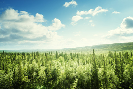Photo for forest in sunny day - Royalty Free Image