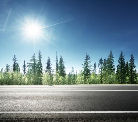 Photo pour asphalt road in forest - image libre de droit