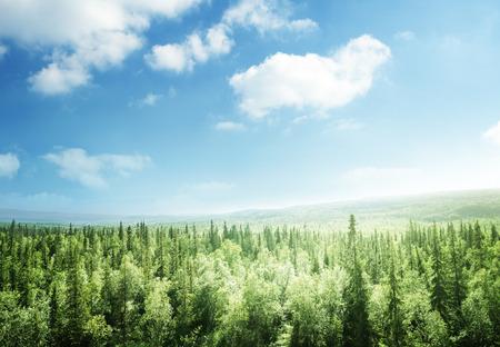 Photo pour forest in sunset time - image libre de droit