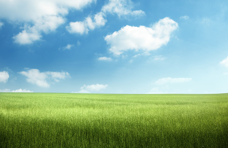Photo pour field of spring grass - image libre de droit