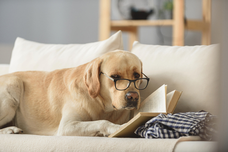 Photo for smart looking dog in glasses with book looking into a camera, exams concept - Royalty Free Image