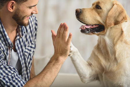 Foto de man holding dog's paw on a sofa, close up - Imagen libre de derechos