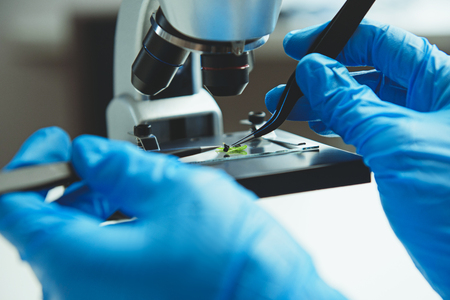 Foto de Scientist in rubber gloves making experiment with plant sample in laboratory - Imagen libre de derechos