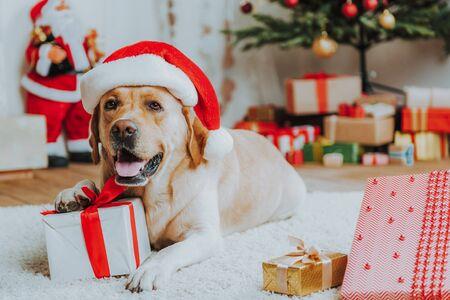 Foto de Cute dog in red Christmas hat on floor - Imagen libre de derechos