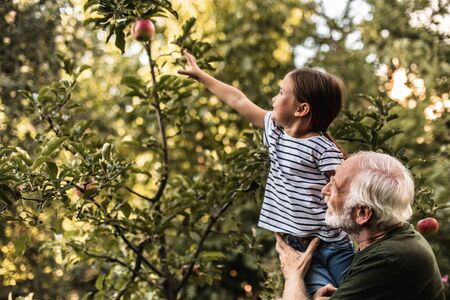 Foto de Grandfather holding his granddaughter picking apple from tree - Imagen libre de derechos