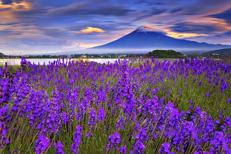 Photo pour Fuji Mountain and Lavender Garden with Colourful Sky at Sunset Time, Oishi Park, Kawaguchiko, Japan - image libre de droit
