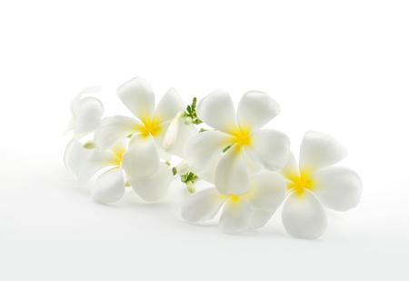 Foto de Tropical flowers frangipani plumeria isolated on white with clipping path - Imagen libre de derechos