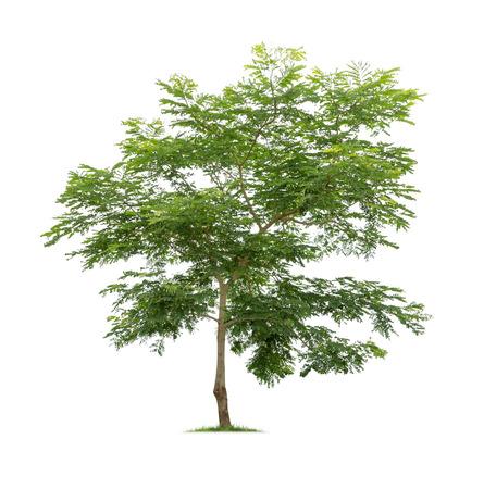 Foto de Isolated tree on white background - Imagen libre de derechos