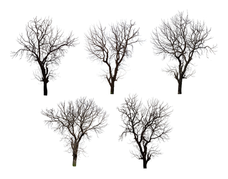 Photo pour Collection of dead tree isolated on white background high resolution for graphic decoration, suitable for both web and print media - image libre de droit