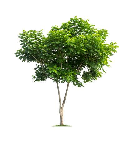 Foto de Tree isolated on white background - Imagen libre de derechos