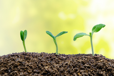 Foto de Sprout growing from soil on blurred natural background for green environment concept - Imagen libre de derechos