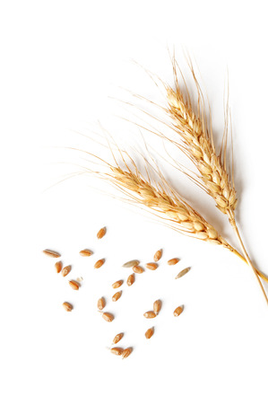 Foto de spikelets and grains of wheat on a white background - Imagen libre de derechos