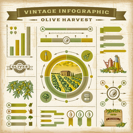 Illustration for Vintage olive harvest infographic set - Royalty Free Image
