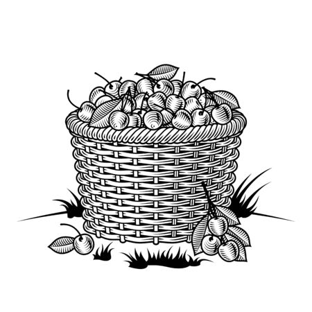 Illustration for Retro basket of cherries black and white - Royalty Free Image