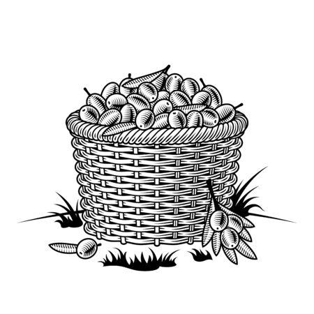Illustration for Retro basket of olives black and white - Royalty Free Image