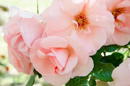 Photo pour Flowers - image libre de droit