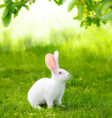 Photo for White rabbit on green grass - Royalty Free Image