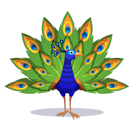 Illustration for Beautiful peacock standing with green feathers out - Royalty Free Image