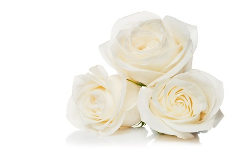 Photo pour Bouquet of white roses on a white background - image libre de droit