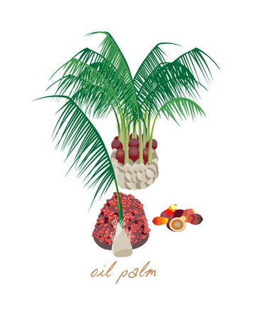 Ilustración de Beautiful tropical oil palm with leaves, flowers and fruits. - Imagen libre de derechos